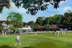 Celebrity match Reeds 30in x 40in oil on canvas - christina pierce, cricket artist